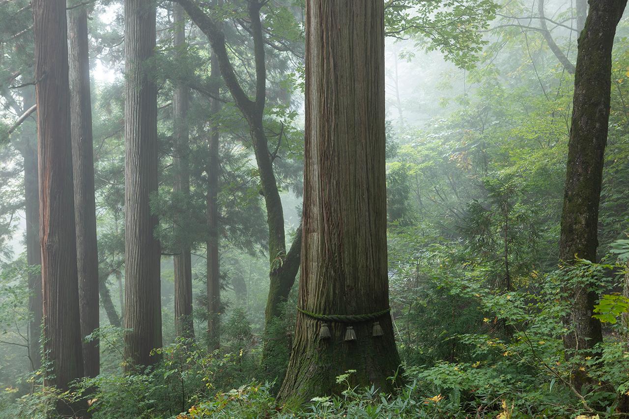 戸隠 杉並木